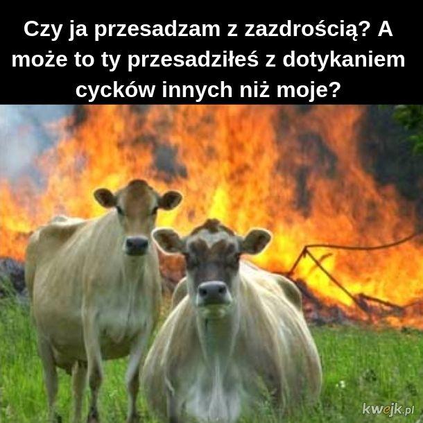 "Krówka mówi ""Muuuuuuusi świat spłonąć"""