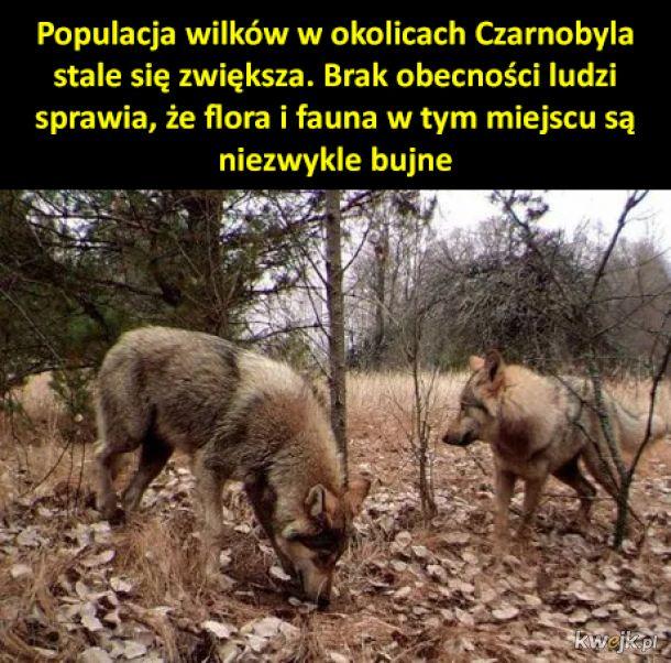 Sanktuarium dzikiej przyrody