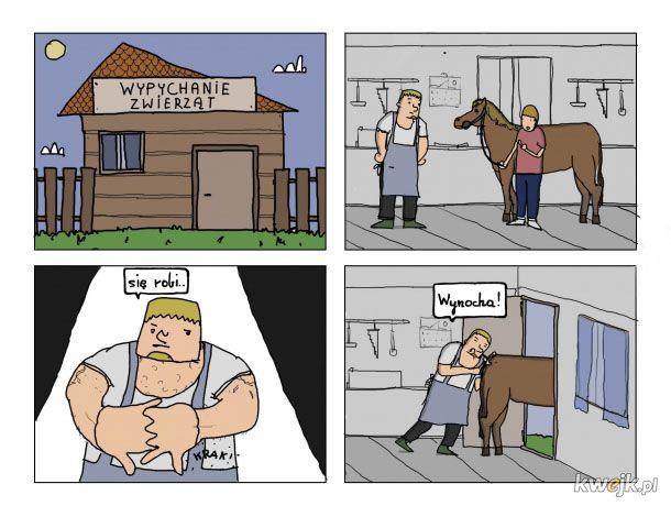 Wypychanie zwierząt
