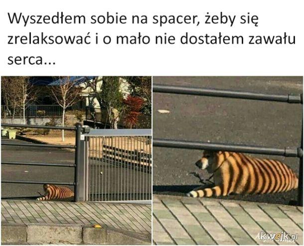 Tygryseł