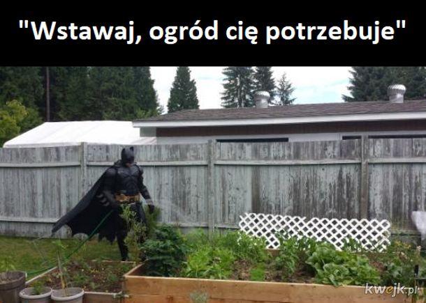 Batman codzienny