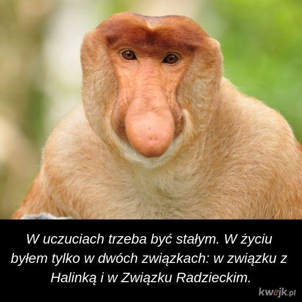 Mądrość Janusza na Walentynki