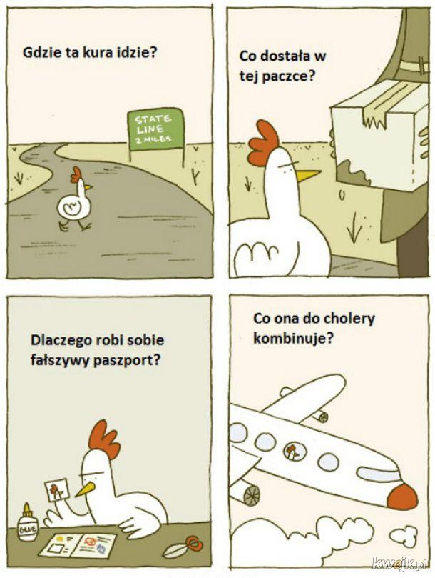 Tajemnicze życie kury