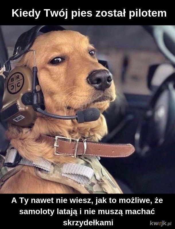 Pieseł-piloteł