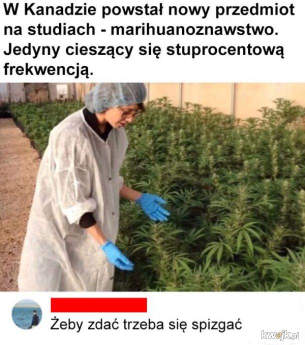 Marihuanoznawstwo