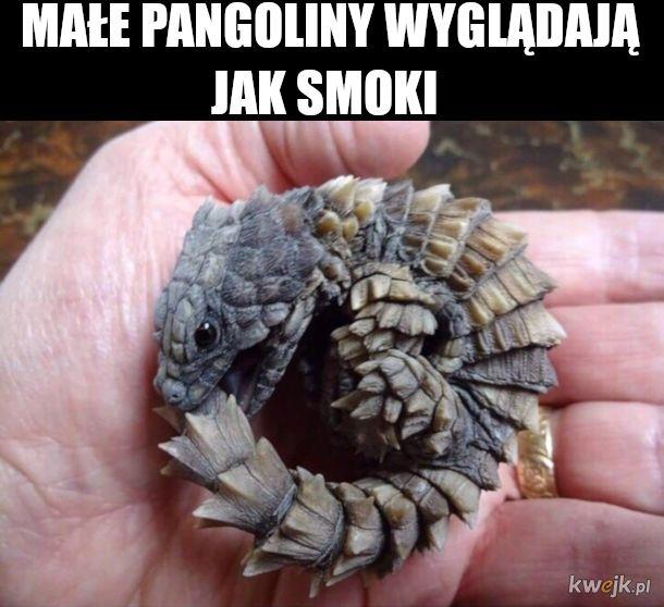 pangoliny
