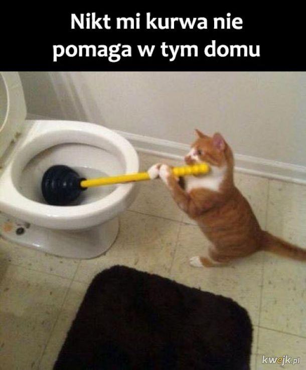 Wkurzony kot