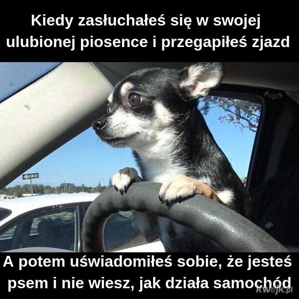 Pieseł-kierowceł