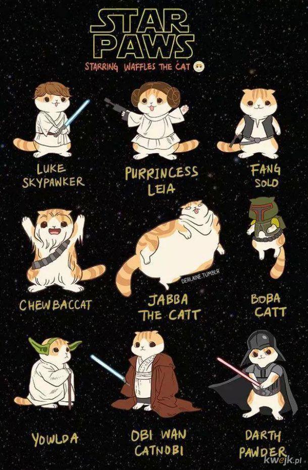 Gwiezdne koty