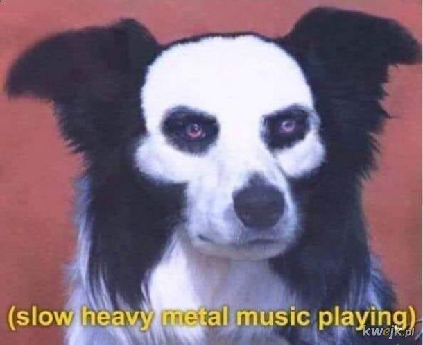 Najbardziej metalowy pies ever.