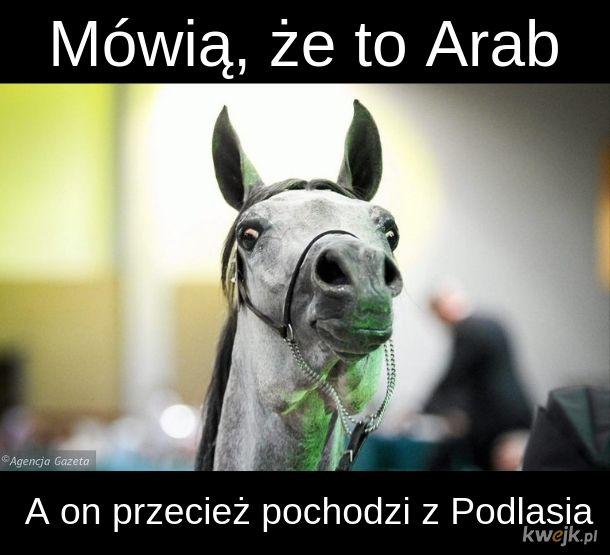 QŃ Arabski