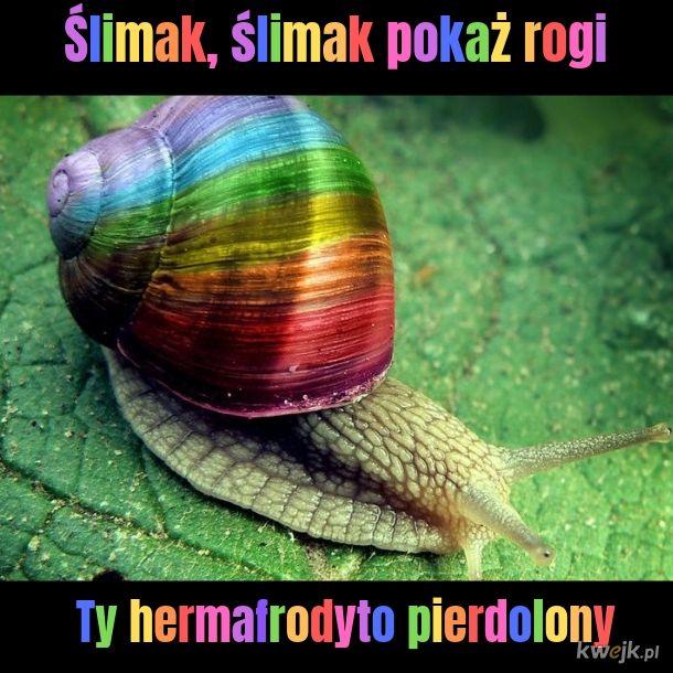 It's ok to be snail