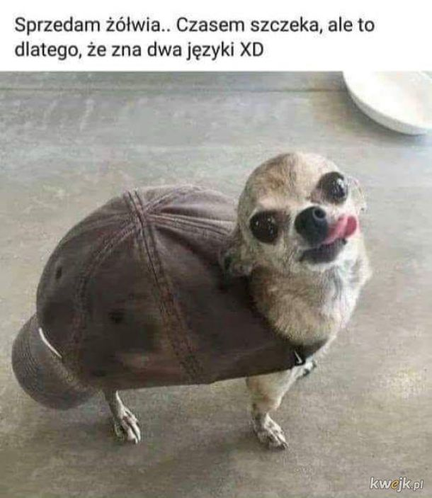 Dziwny żółw