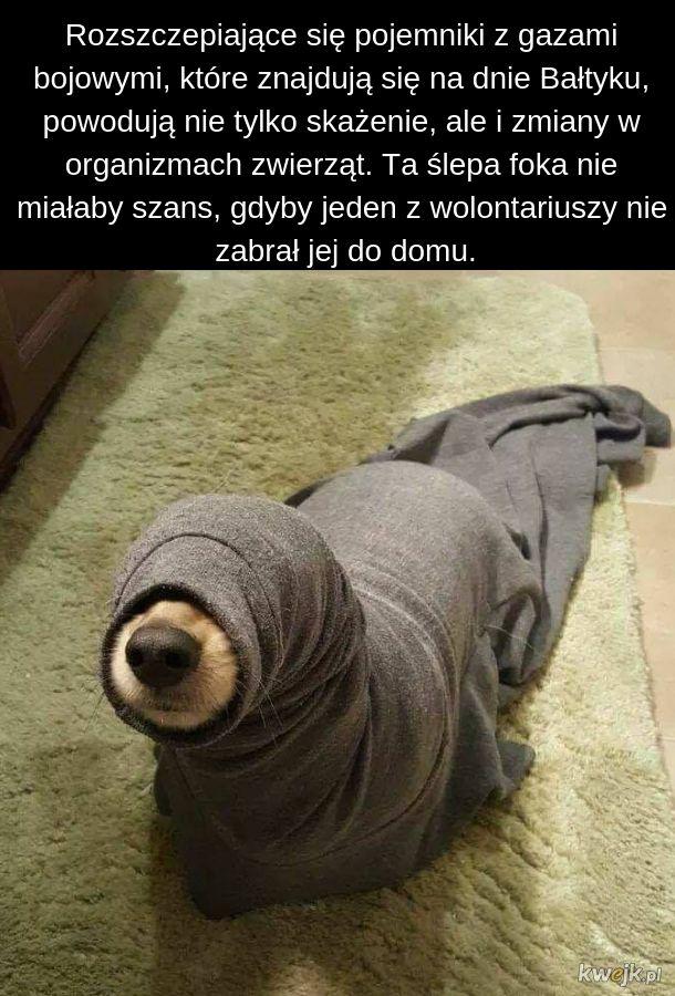 Ślepa foka