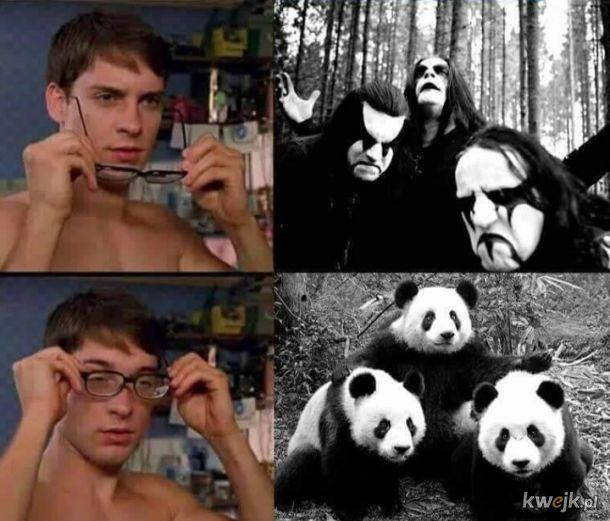 Panda band