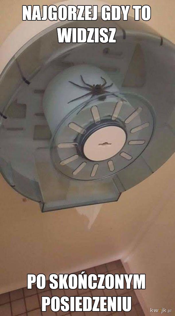 pajączek toaletowy
