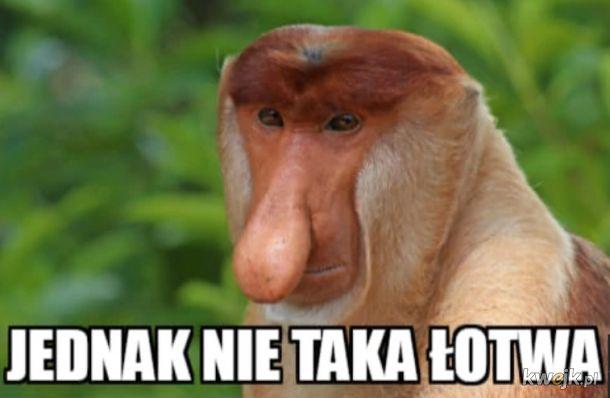Memy po meczu Polska-Łotwa, obrazek 12