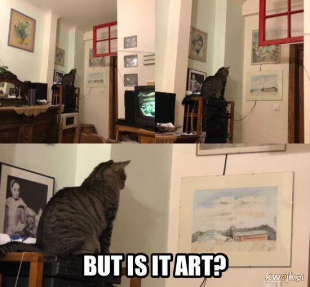 czo ten kot