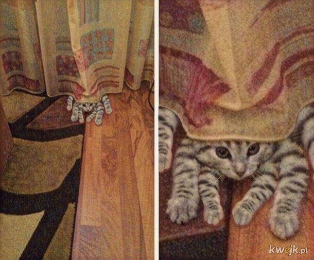 Koto-pająk