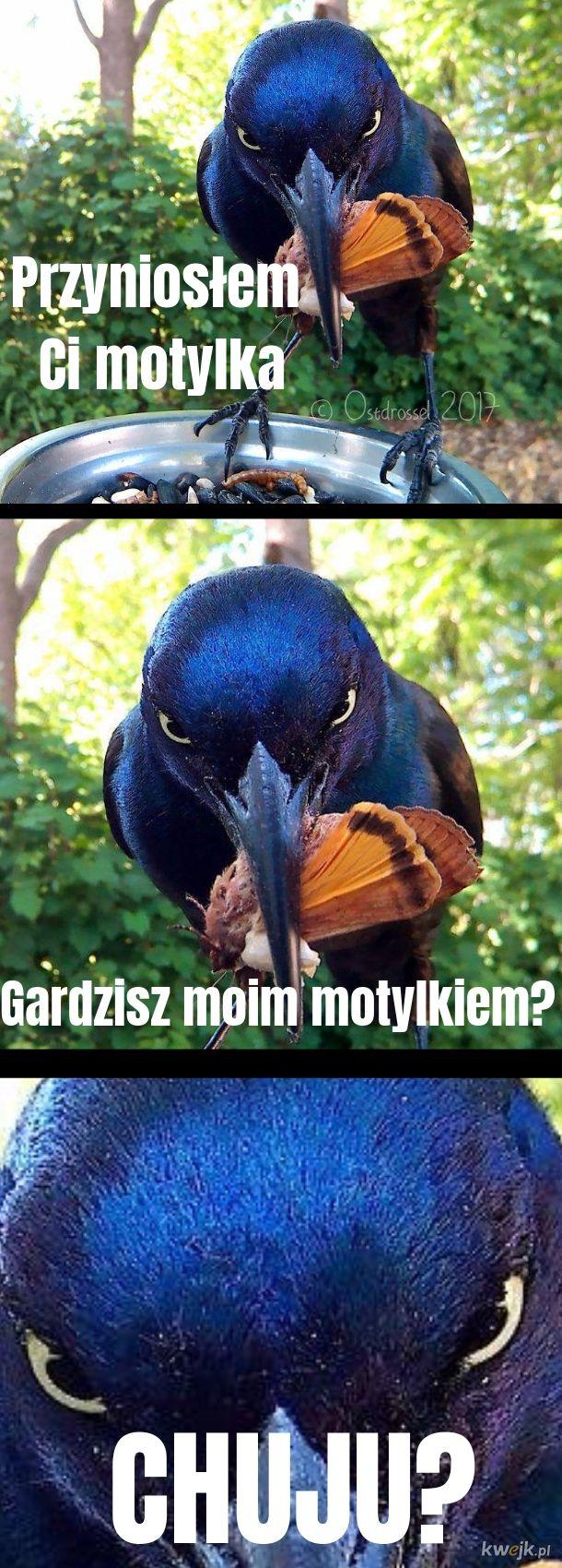 Nie denerwuj się ptaszku!
