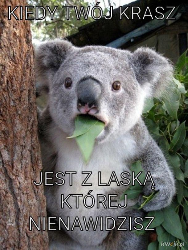 Krasz