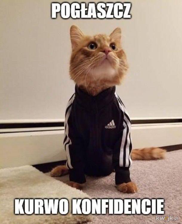 Koteł dreseł