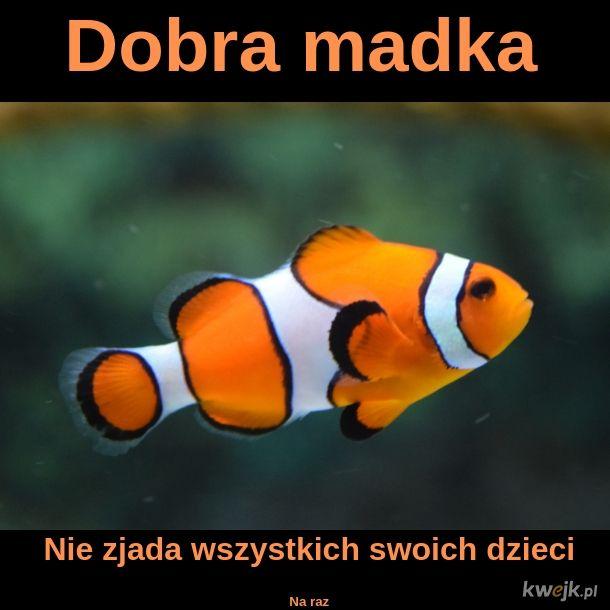 Madka Rypka