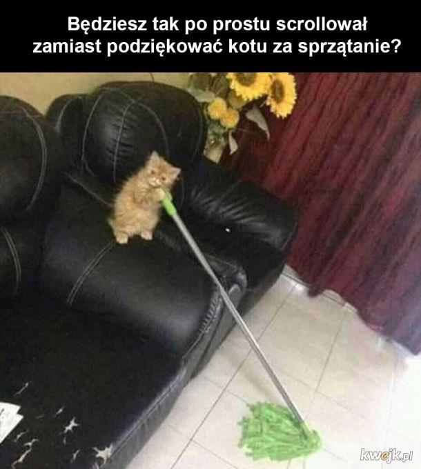 Dziękuję koteczku