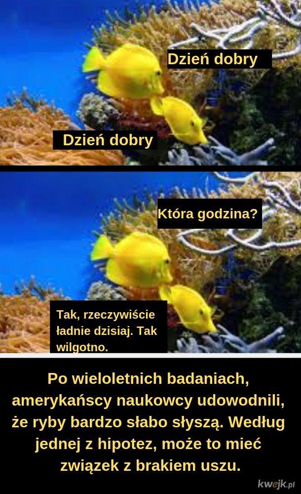 Ryby i amerykańscy naukowcy