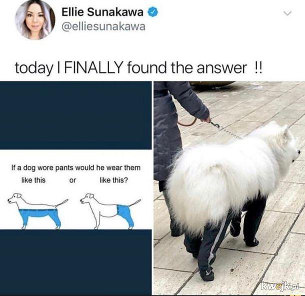 Odpowiedź