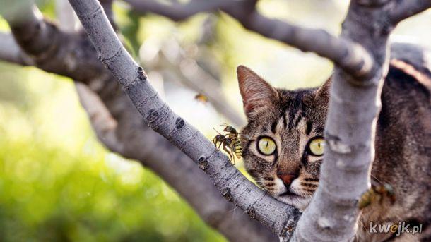 kot ogląda stosunek os