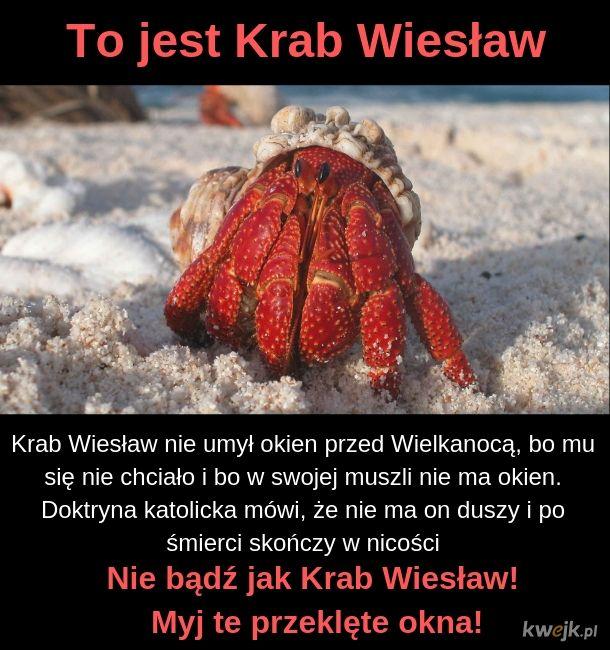 Krab Wiesław