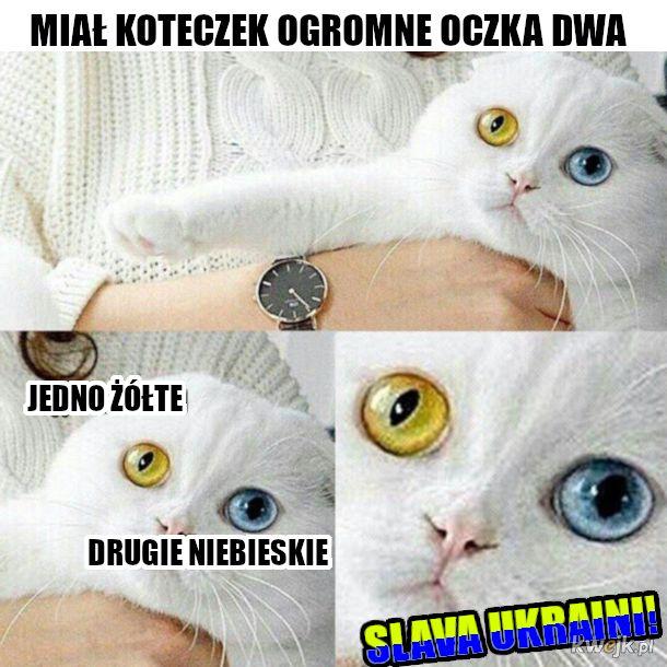 banderowy mem