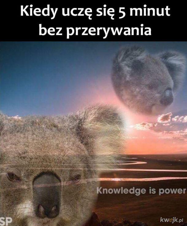 Dużo wiedzy