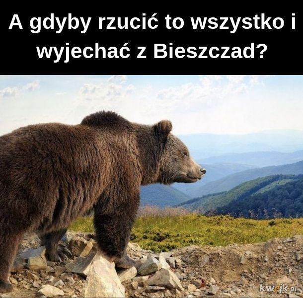 Niedźwiedzieł filozofeł