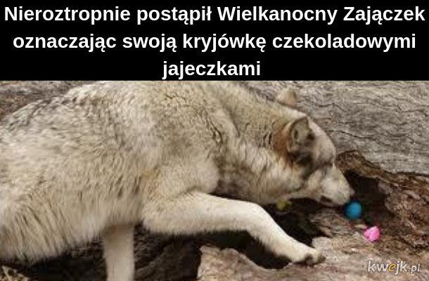 Wielanocny wilk