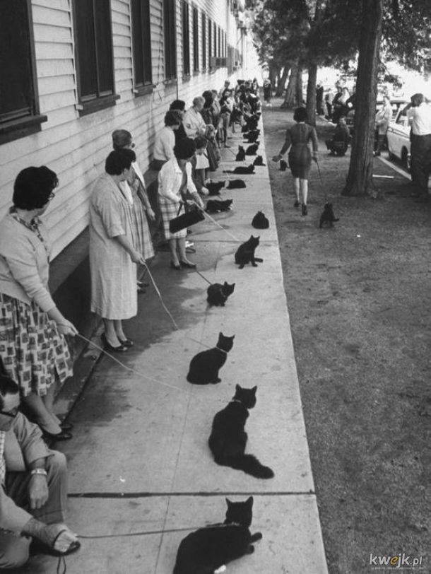 casting ma czarnego kota