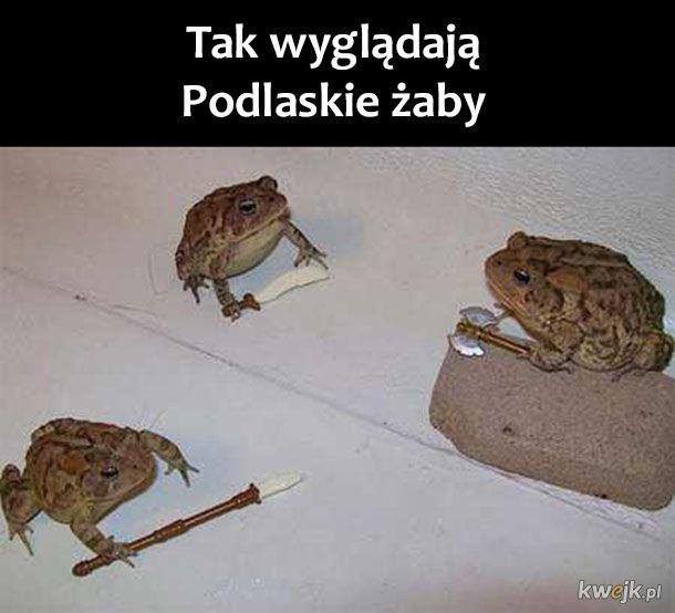 Podlasie żaby