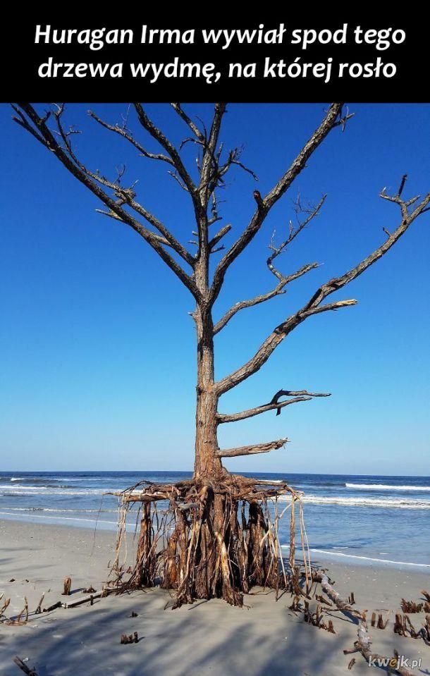 Ciekawe rzeczy, jakie ludzie znaleźli na plaży
