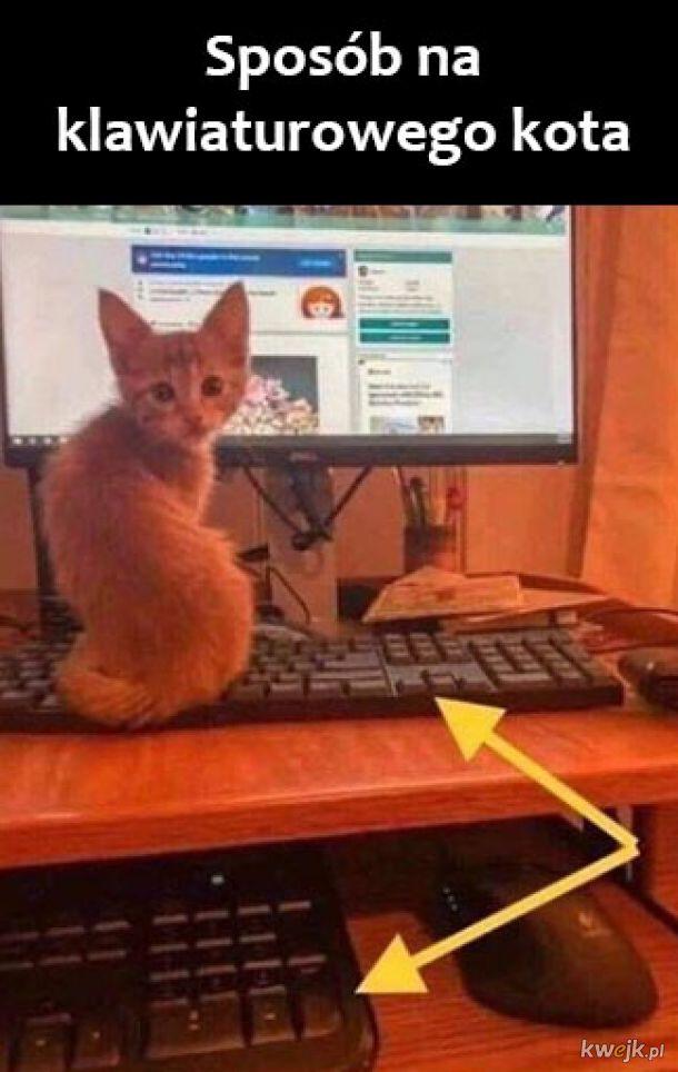 Klawiaturowy kot