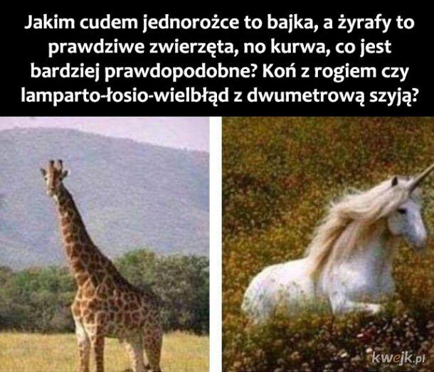 Żyrafy są dziwne człowieku