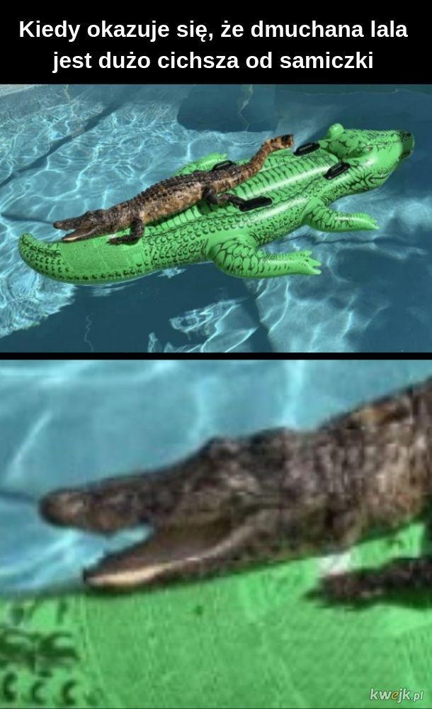 Krokodyl czy tam aligator