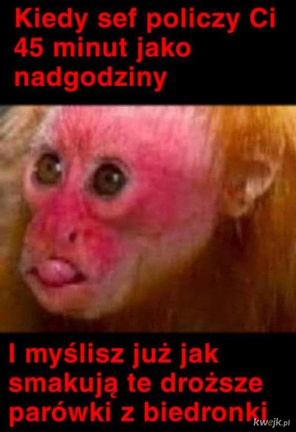 Saszka