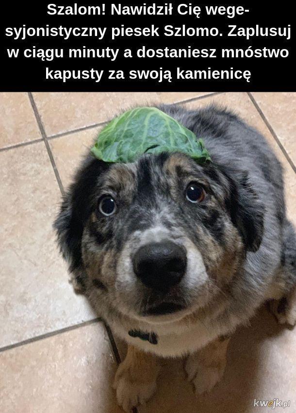 Szlomo