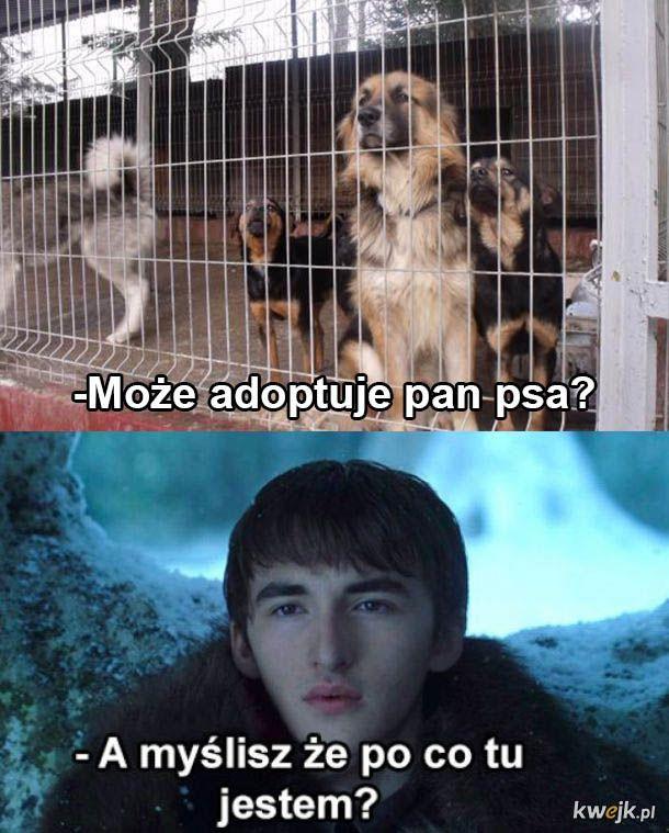 Kiedy odwiedzam schronisko dla psów