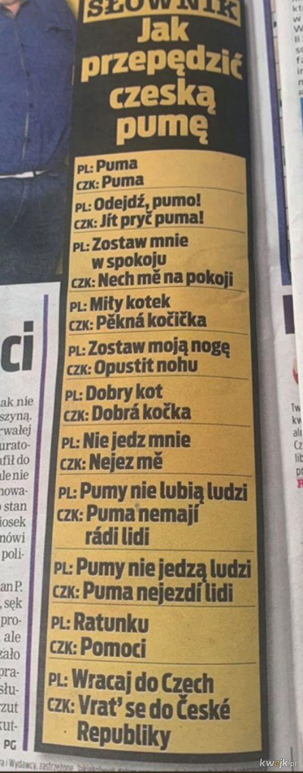 Dobrze, że puma zna Czeski