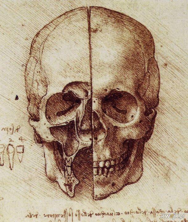 Anatomiczne szkice Leonarda Da Vinci