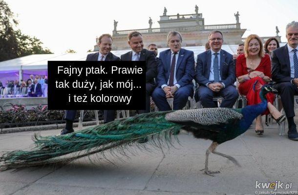 Prezydent puścił pawia