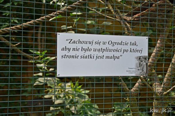 Nosacze Sundajskie mogą nie skumać