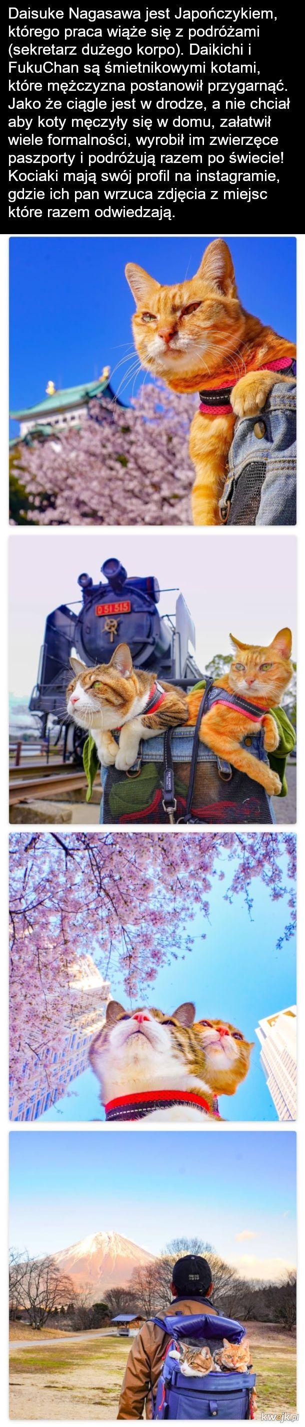 kociaki w trasie